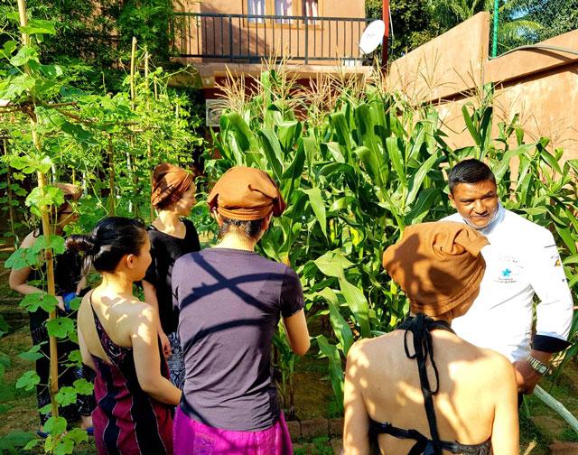 Garden Fresh atVegetable Karunakarala Ayurveda Resort